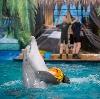 Дельфинарии, океанариумы в Волоколамске
